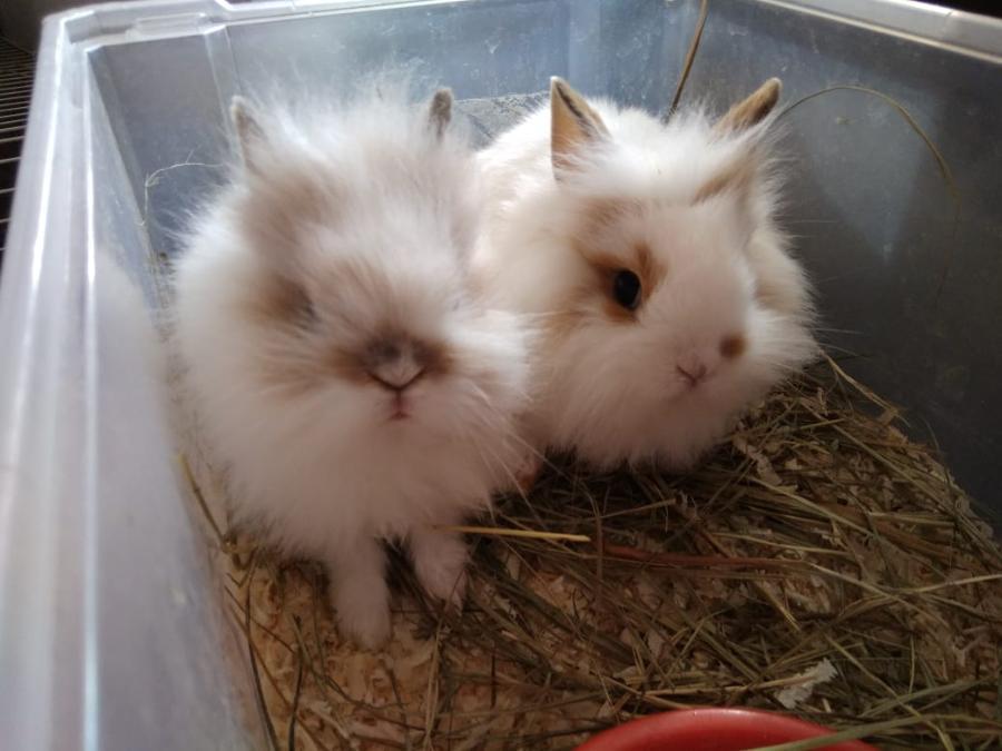 Сколько стоит живой кролик в зоомагазине