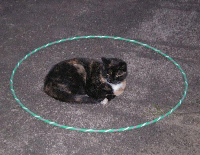 Как самому поймать дикого бездомного котенка, который боится людей, или взрослую одичавшую домашнюю кошку?