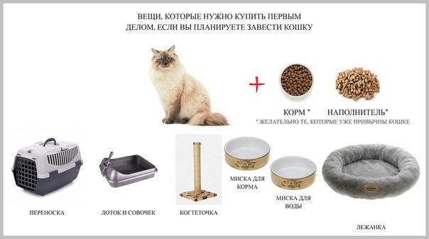 Как отучить кота метить территорию? | hill's