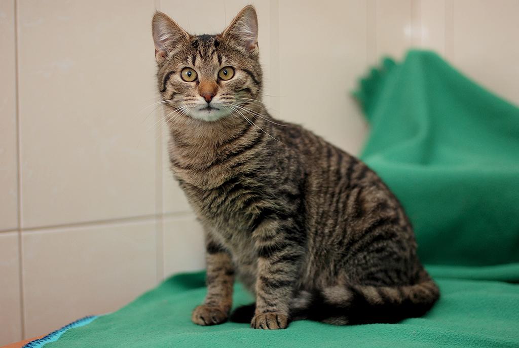 Как назвать серого котенка мальчика и девочку: популярные и красивые имена