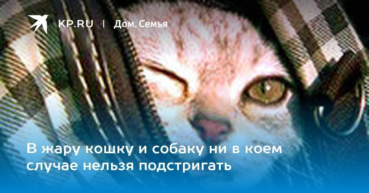 Душа у животных: есть ли или нет в православии, куда попадают животные после смерти – молитвы и акафисты на spas-icona.ru