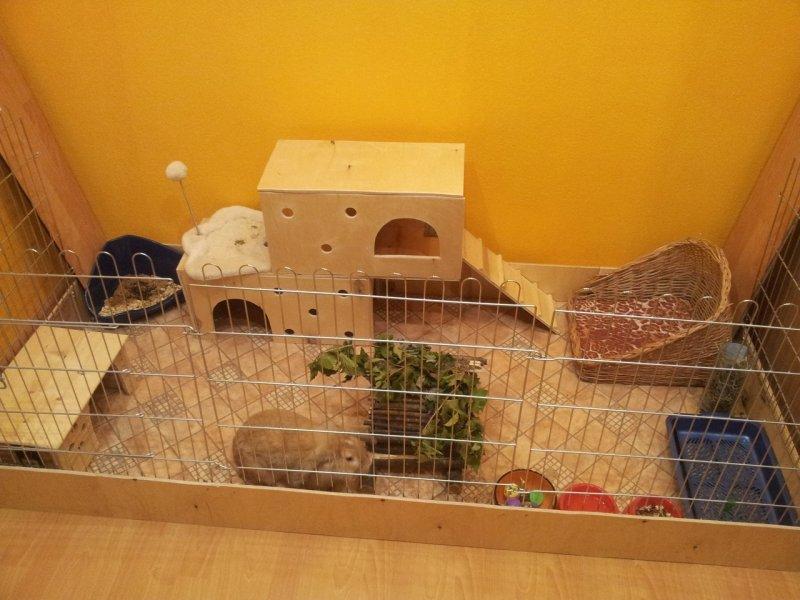 Чем можно кормить декоративного кролика в домашних условиях?