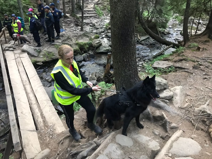 Собака чешет уши: причины, лечение и профилактика собака чешет уши: причины, лечение и профилактика