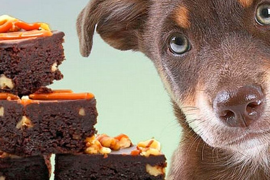 Что делать, если собака съела таблетки?