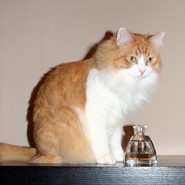 Какие запахи не любят кошки больше всего? рейтинг ароматов