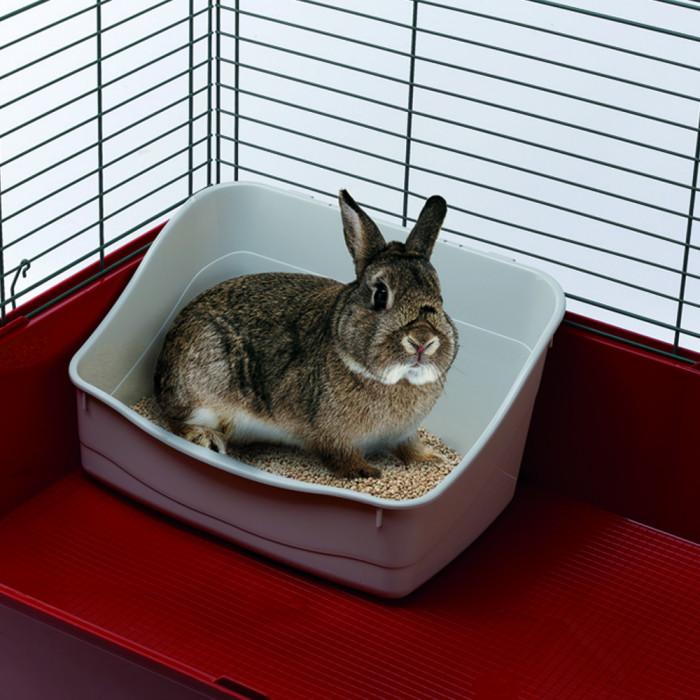 Как правильно ухаживать за декоративным кроликом – условия содержания, кормление, гигиена
