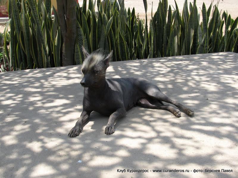 Самые страшные породы собак: подборка описаний и фото