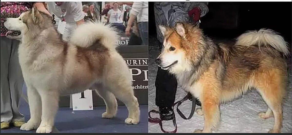 Самые дешевые породы собак - окружающий мир вокруг нас