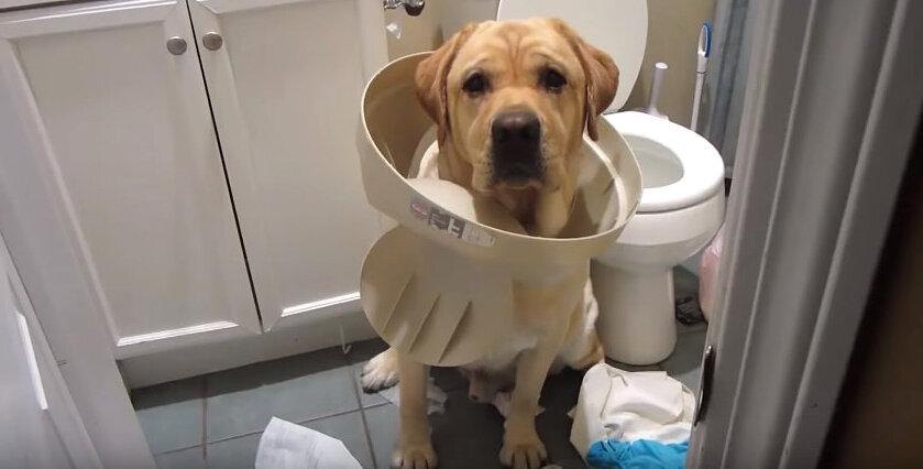 Как отучить собаку метить и писать везде? зачем собаки метят?   hill's pet