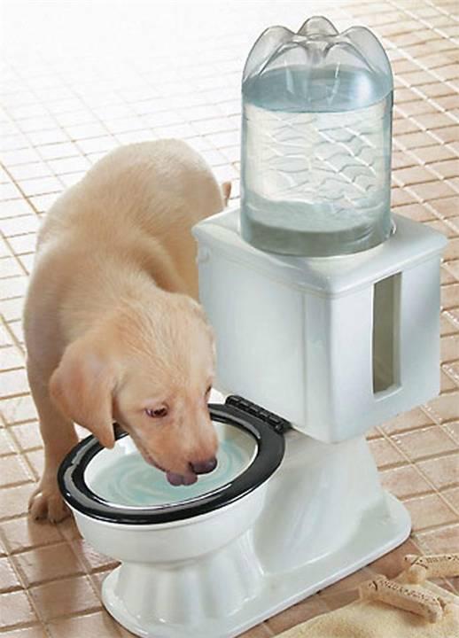Как приучить собаку к туалету на улице? приучение щенка или взрослой собаки к туалету :: syl.ru