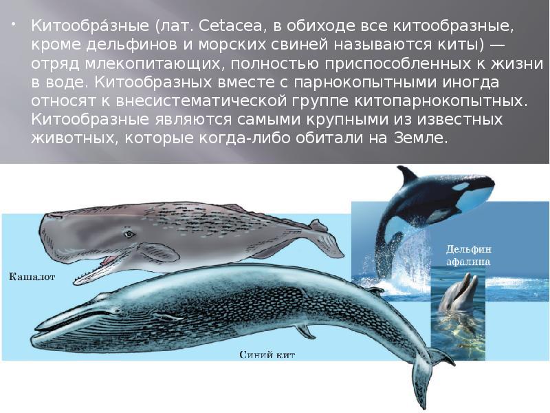 Дельфин (delphinidae): фото, виды, интересные факты