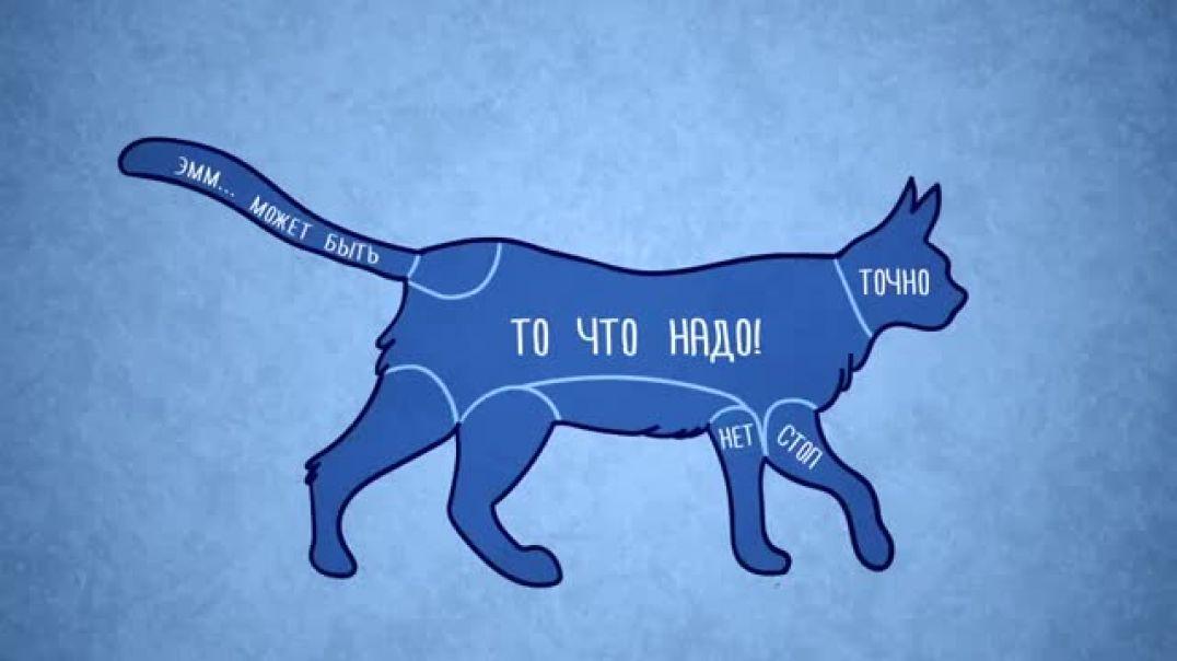 Почему кошки любят, когда их гладят
