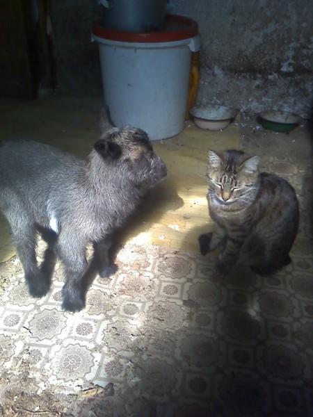 Описание пород котов-крысоловов, особенности ухода
