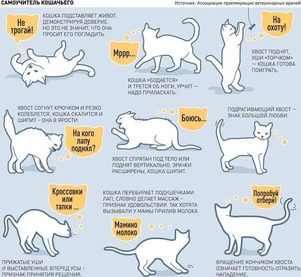 Зачем кошки мнут одеяло, постель и человека?