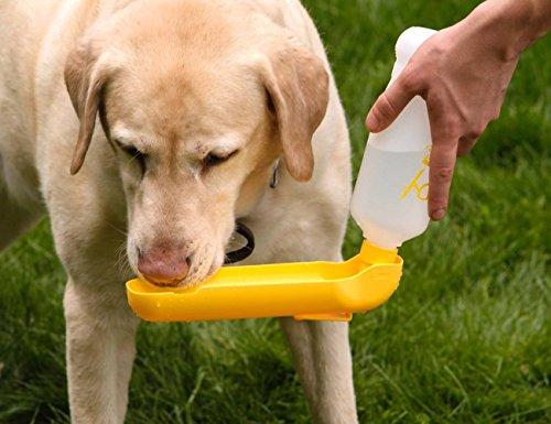 Полоса препятствия и снаряды для тренировки собак своими руками | hill's