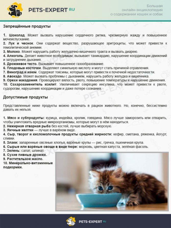 Причины и лечение непрекращающейся рвоты у кошки