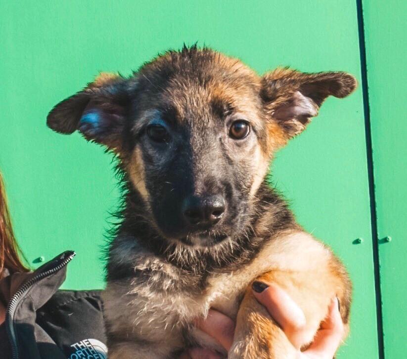 Учимся определять заворот кишок у собаки: диагностика и лечение