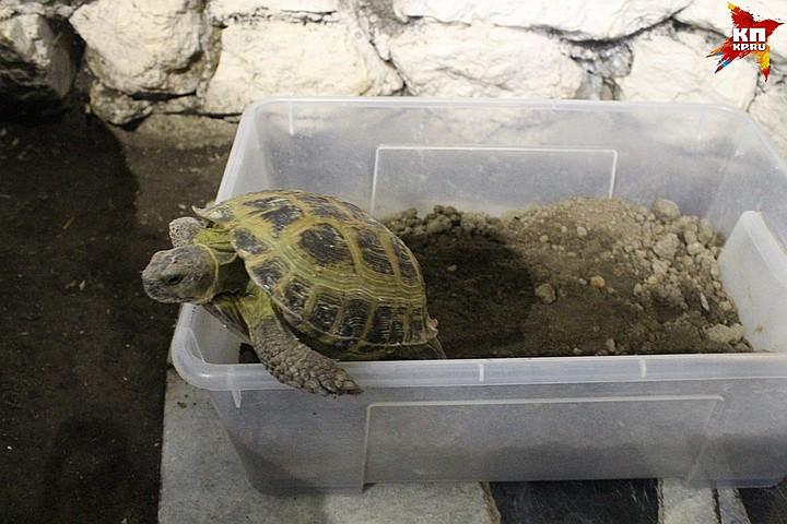 Как выбрать черепаху для ребенка