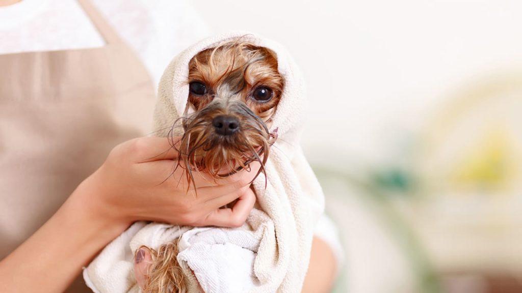 Чем мыть плитку в ванной — лучшие идеи по уходу и очистке самых популярных вариантов плиток (85 фото)