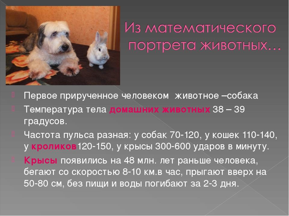 Увеличение объема живота – «ветеринар приедет!», г. москва