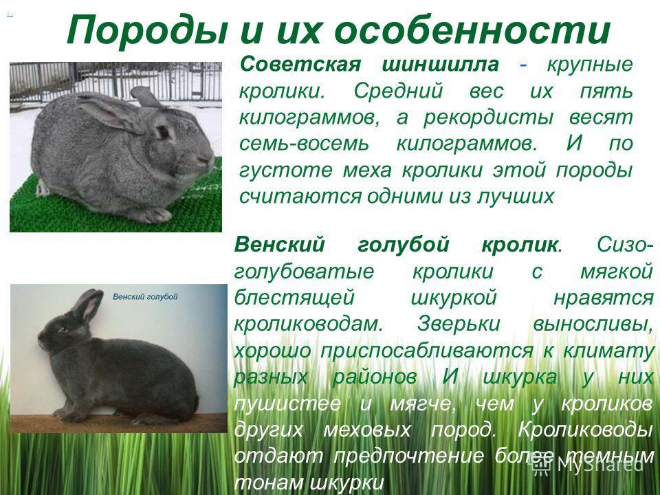 Сколько живут кролики: в дикой природе, декоративные домашние