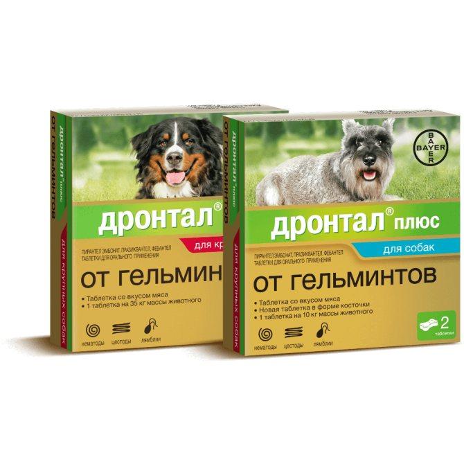 Лучшие средства от глистов у собак на 2021 год с плюсами и минусами