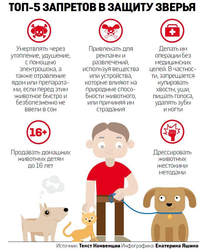 Руководство по приёму собаки из приюта в вашу семью
