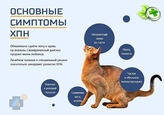 Железодефицитная анемия у кошек и собак: причины, симптомы, диагностика и лечение заболевания