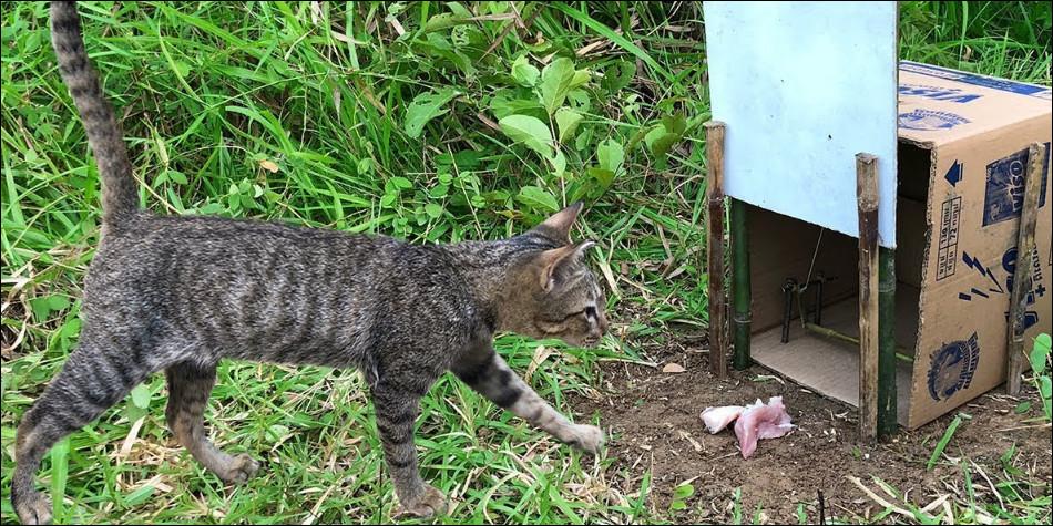 Как поймать кошку дикую у себя дома