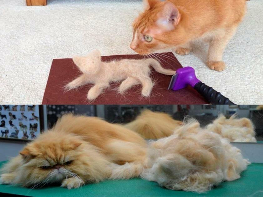 Кот сильно линяет (17 фото): что делать, если кошка линяет зимой? почему коты линяют круглый год? какие витамины нужны в период линьки?