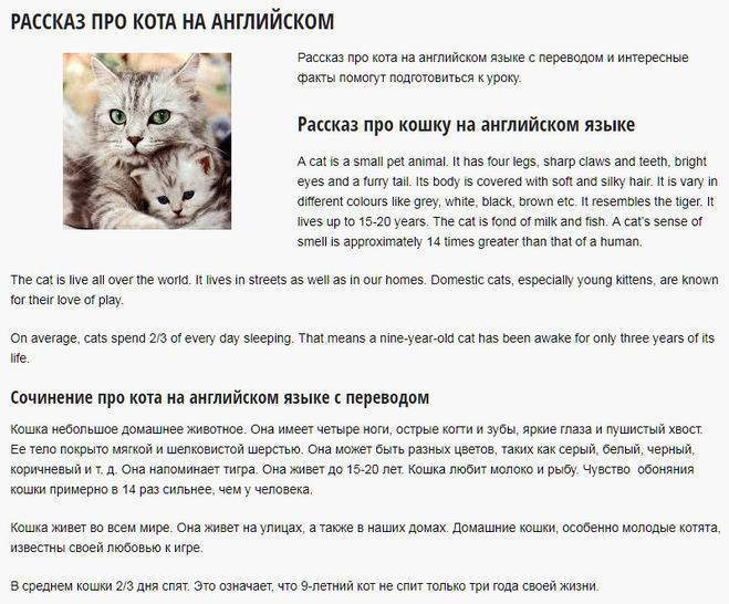 Английские имена для кошек - котостудия