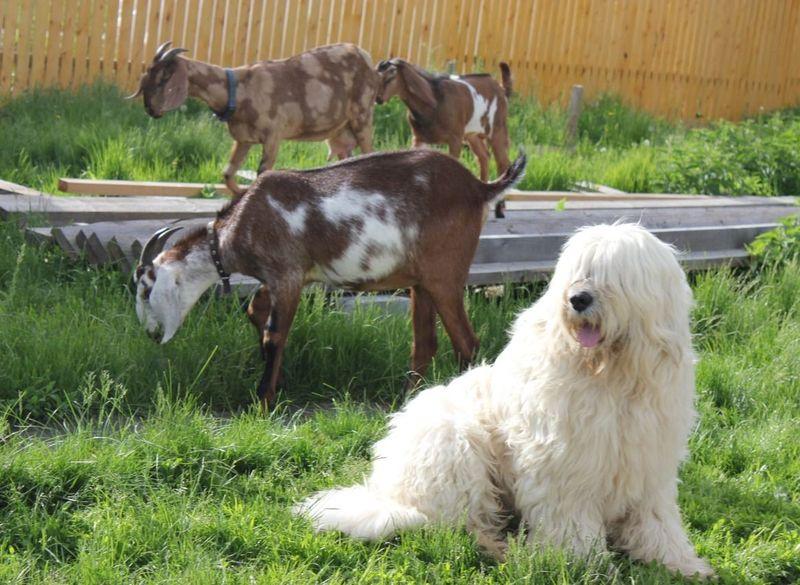 Виды овчарок. описание, особенности, названия и фото видов овчарок | живность.ру
