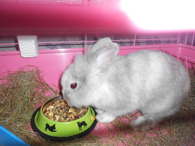 Сколько стоит декоративный кролик: средняя цена и породы кроликов