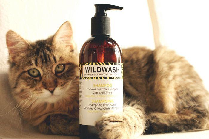 Рейтинг шампуней для кошек