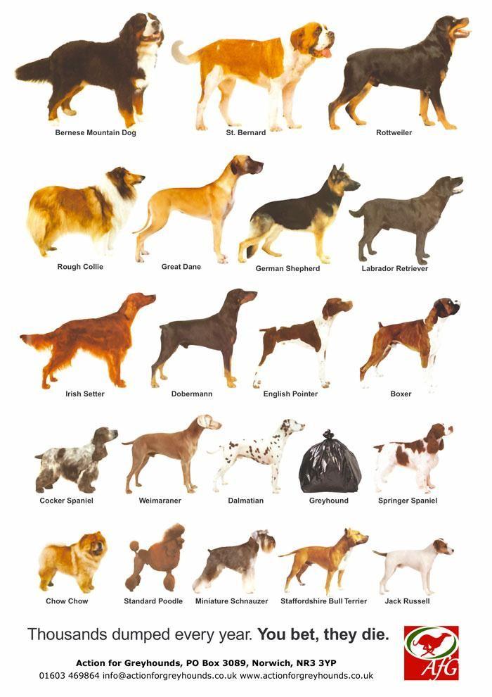 Как определить породу щенка и собаки— с чего начать?