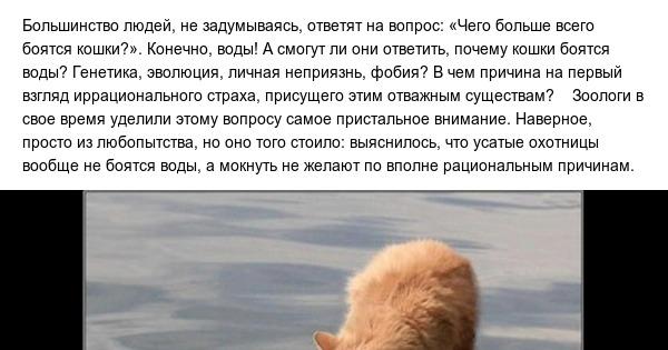 Почему кошки боятся воды и как их купать?   hill's pet