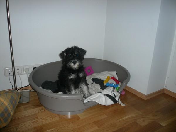 Как приучить собаку к туалету на улице? приучение щенка или взрослой собаки к туалету