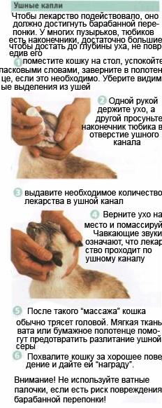 Как чистить уши собаке - пошаговое описание процедуры