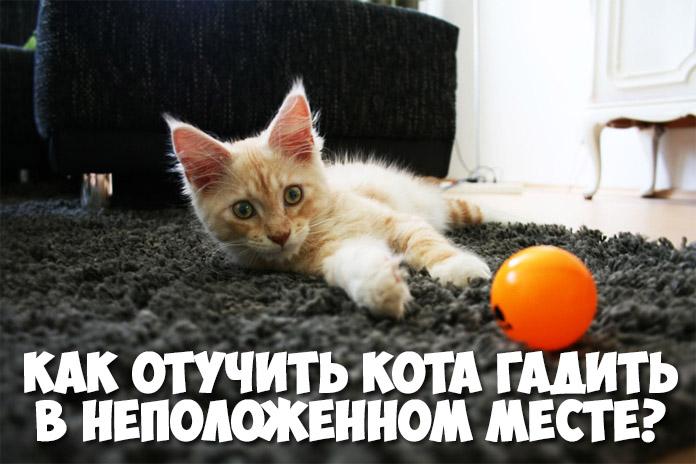 Как отвадить от двора котов народными средствами и сделать так, чтобы кошки не гадили в подъезде: эффективные способы