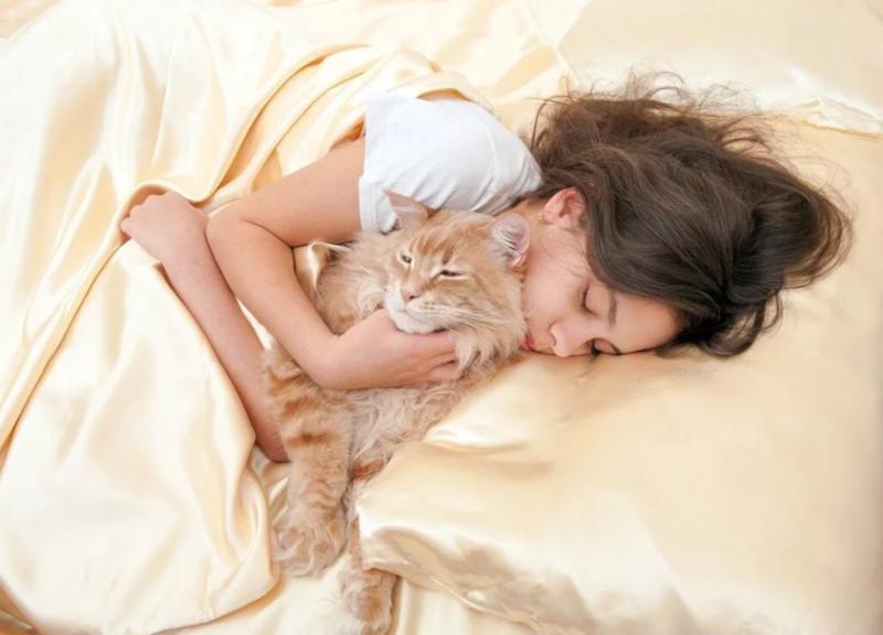 Кошка не дает спать ночью: решаем проблему кошачьей бессонницы