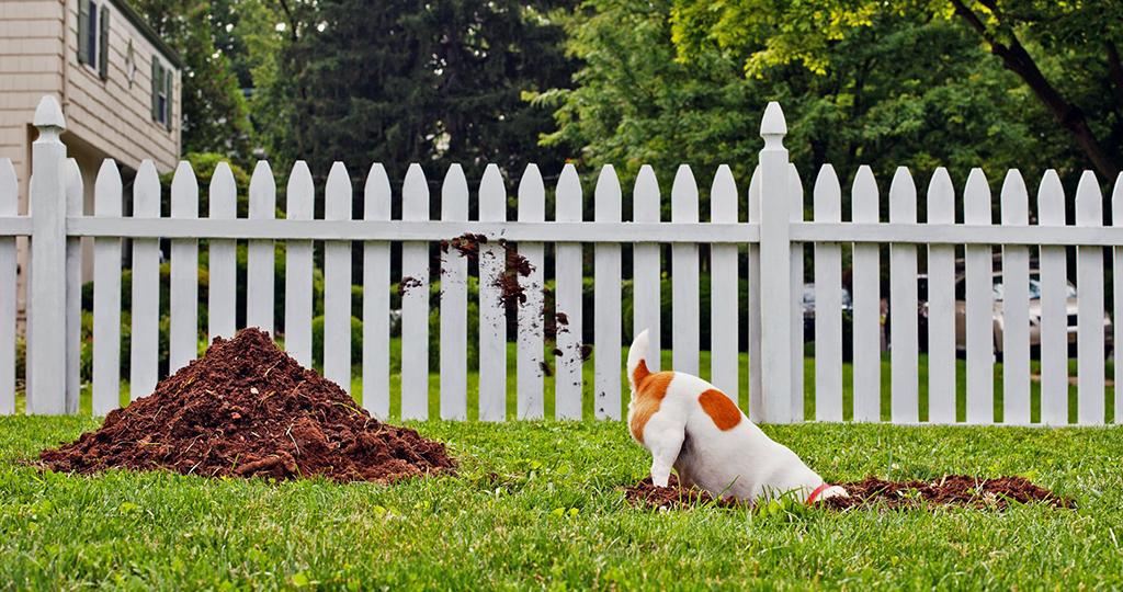 Почему овчарка роет ямы во дворе?