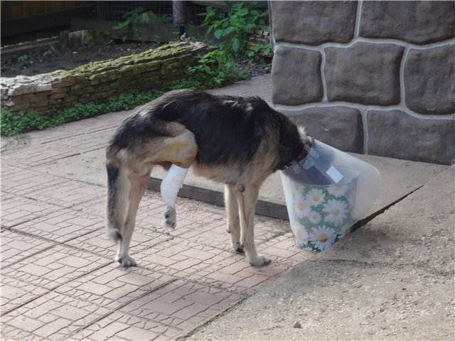 ᐉ почему собаки валяются в тухлятине и экскрементах - причины, как отучить - zoovet24.ru