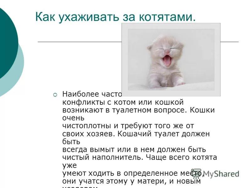 Можно ли кошкам яйца и в каком виде давать их питомцам? | hill's pet