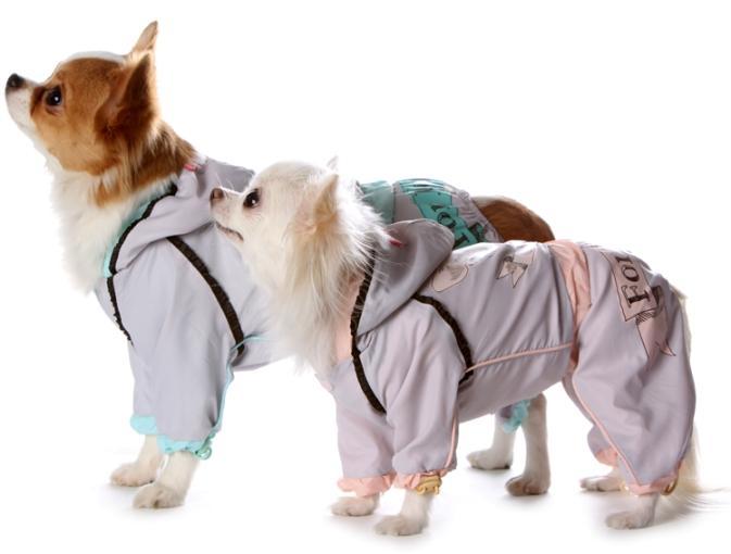 Уход и содержание чихуахуа в домашних условиях: отношение пса к ребенку, стрижка длинношерстных, туалет для мальчиков в квартире и нужен ли намордник, как купать?