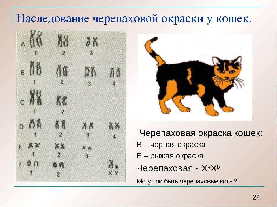 Как назвать котёнка: идеи и правила | hill's