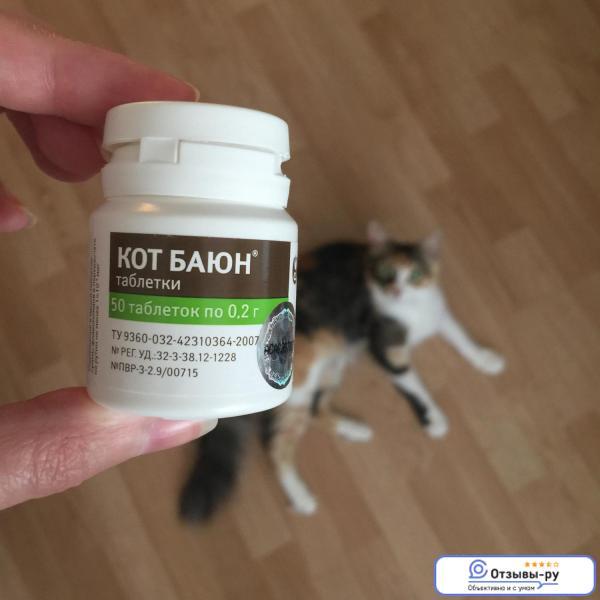 Снотворное для кошек: виды препаратов для перевозки и стрижки, побочные эффекты