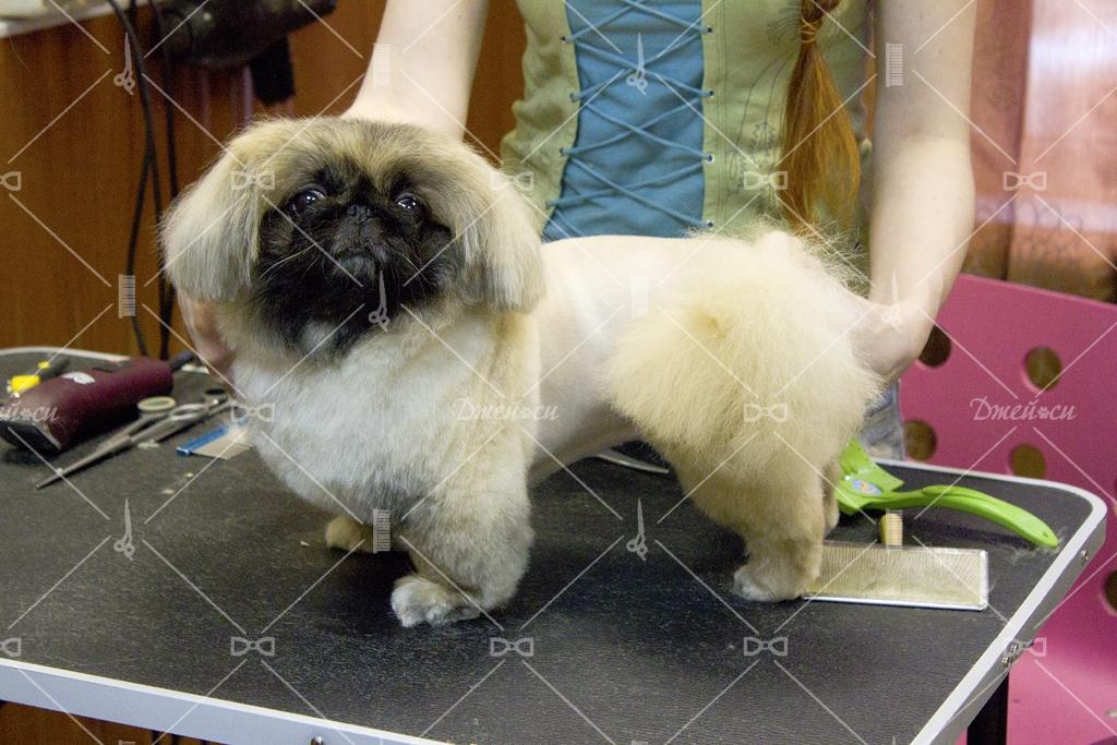 Стрижки для собак пекинесов
