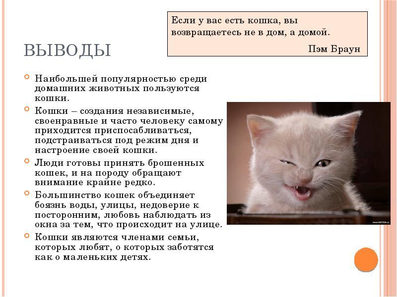 Влияние кошки на здоровье человека. позитивное влияние кошек: 5 интересных фактов   интересные факты