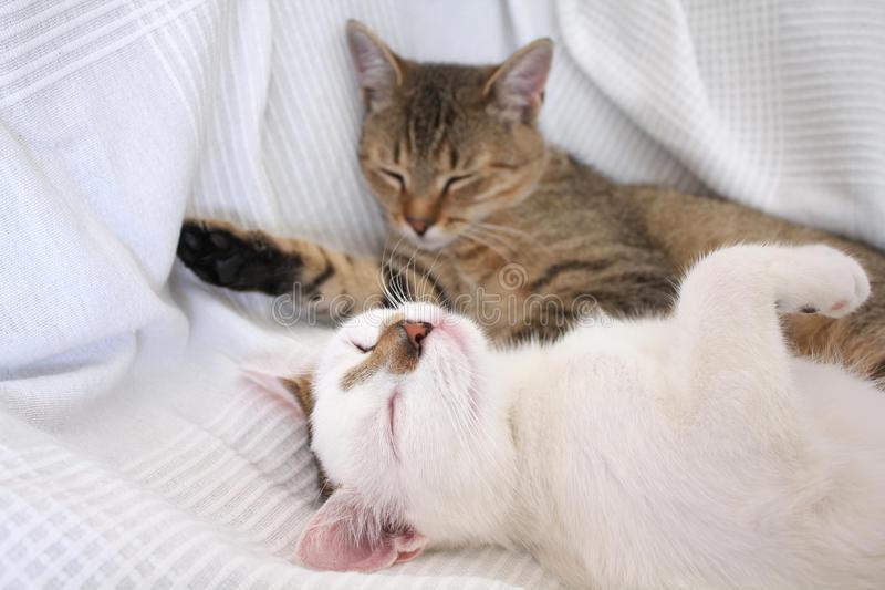 Зоопсихологи рассказали о причинах. почему кошки любят спать рядом с человеком