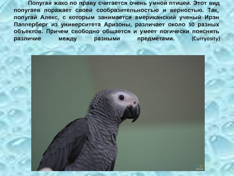 Все виды пород попугаев